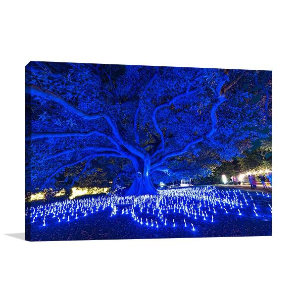 Sydney Blue Light Festival Australia