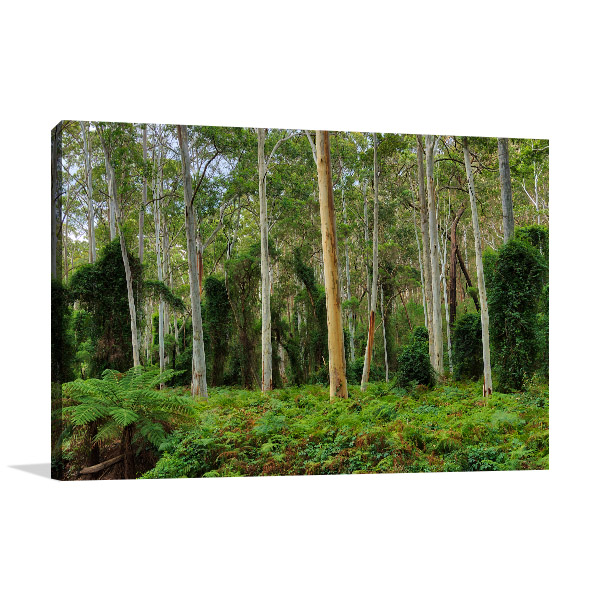 Thirlmere Lakes National Park Art Print