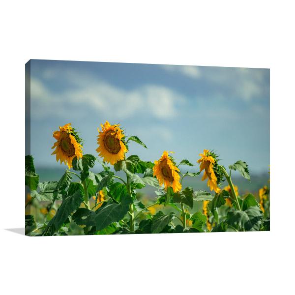 Toowoomba WallPrint Sunflower Fields