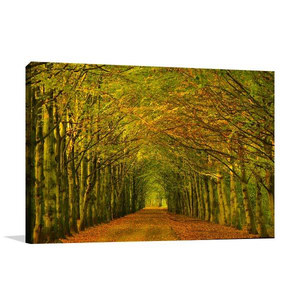 Tree Tunnel Canvas Art Prints