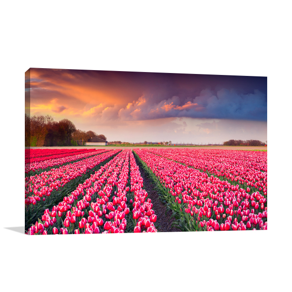 Tulips Sunrise Prints Canvas