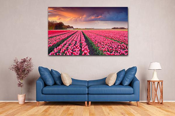 Tulips Sunrise Canvas Art Prints