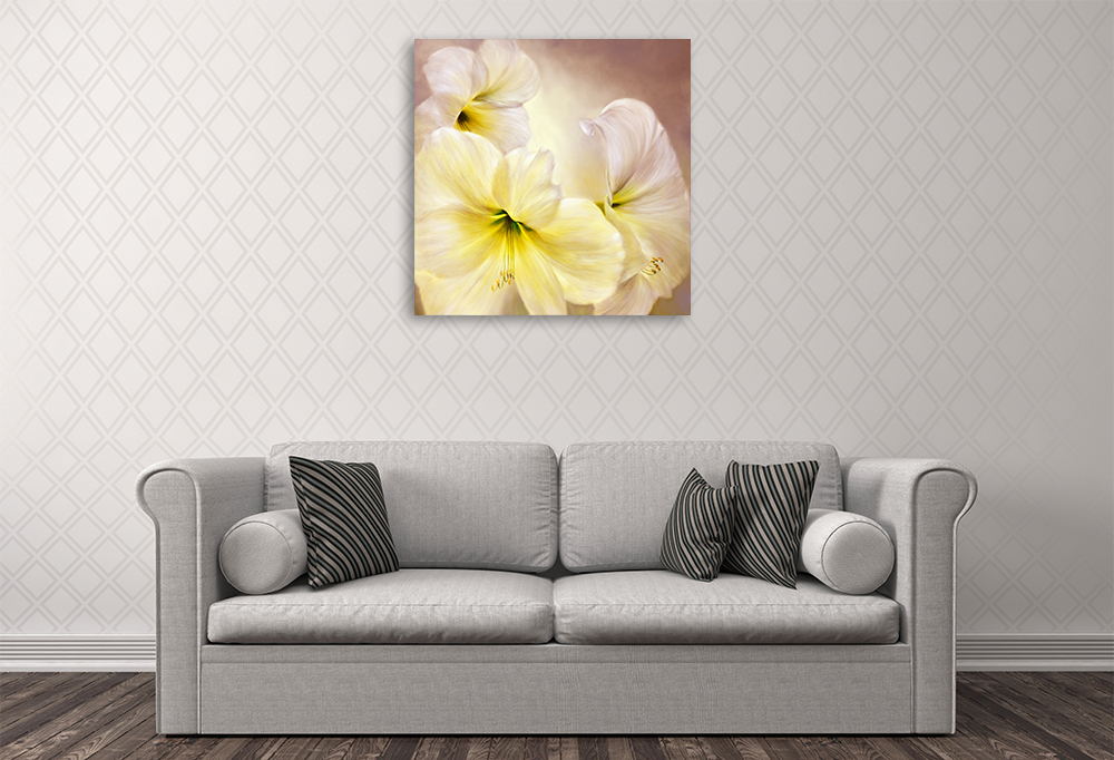 Annette Schmucker | White Amaryllis | Canvas