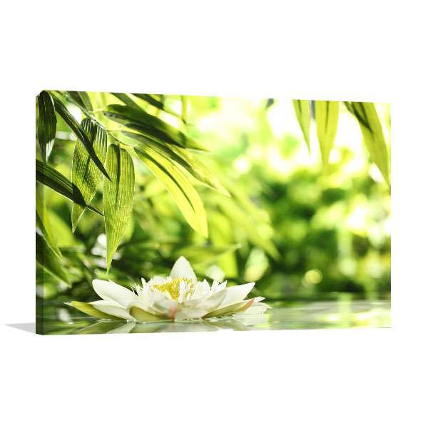 Water Lily Float Canvas Art