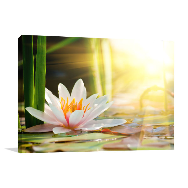 Water Lily In A Pond Canvas Art Prints