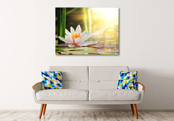 Water Lily In A Pond Prints Canvas