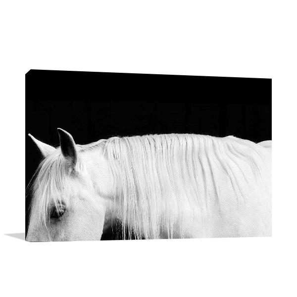 White Horse on Black I Wall Art Print