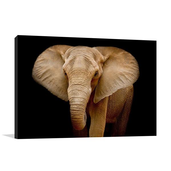 Wildlife Elephant Wall Print