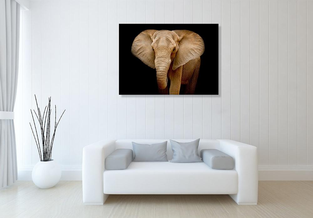 Brown Wild Animals Wall Print Decor