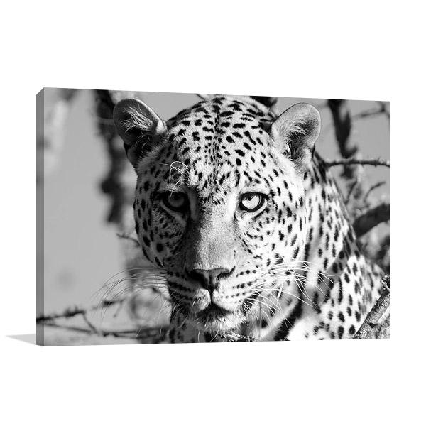 Wildlife Leopard Wall Print