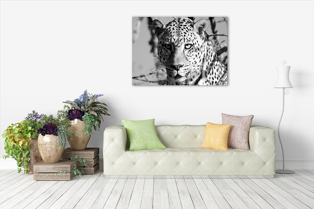 Black and White Animal Art Print
