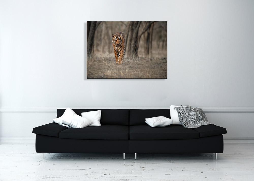 Animal Art Nature Photography Print