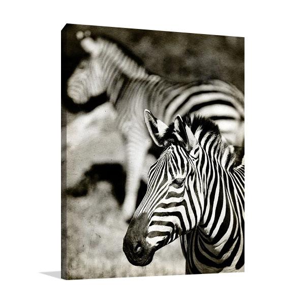 Zebras Canvas Print | Arabella Studios