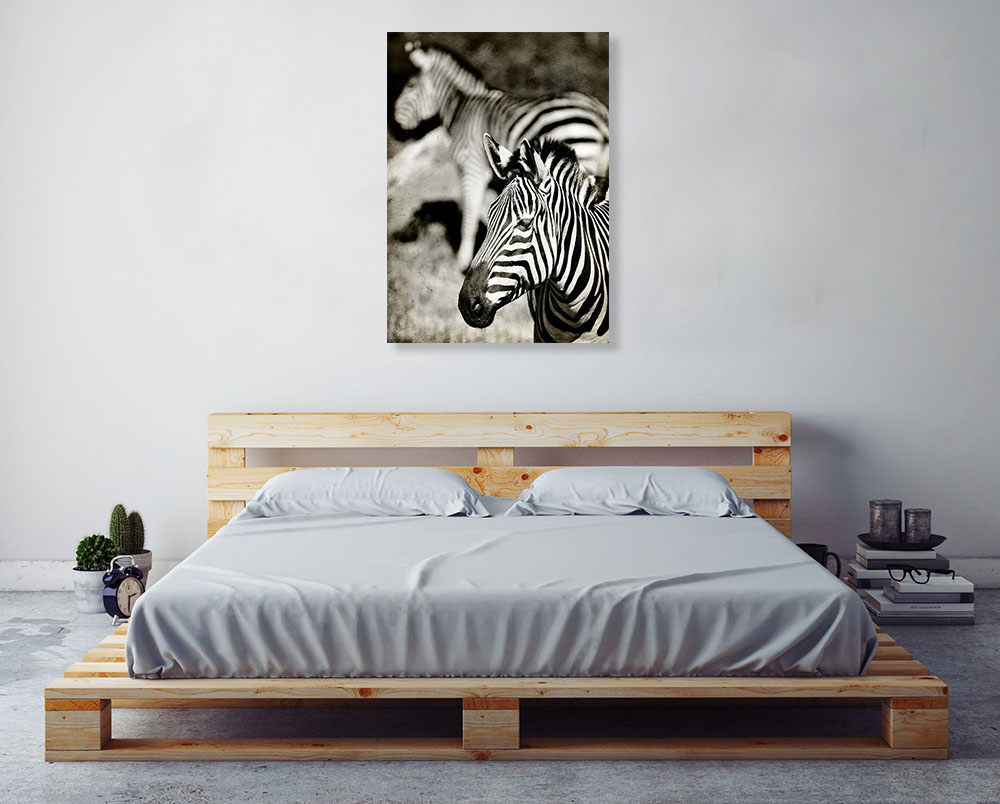 African Black and White Animal