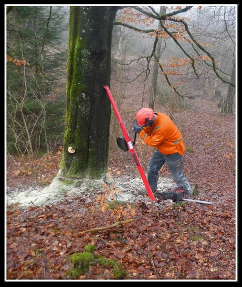 Reipal Type VI RH-PUSHER Tree Jack from Sweden  for Help Pushing large Hardwood Trees Safely
