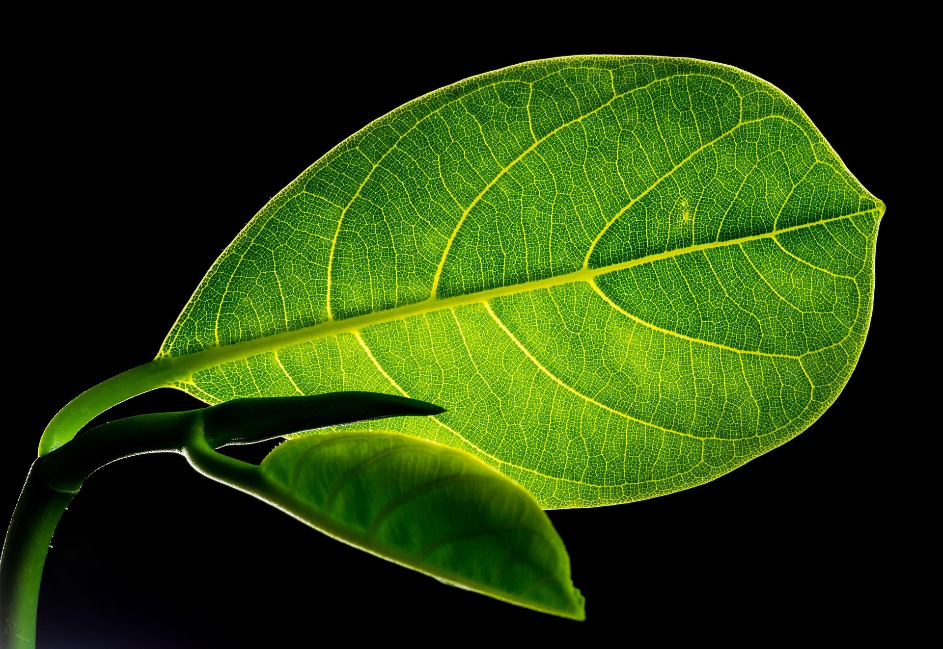 leaves-299931-1920.jpg