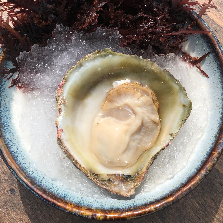 ss-oyster.jpg