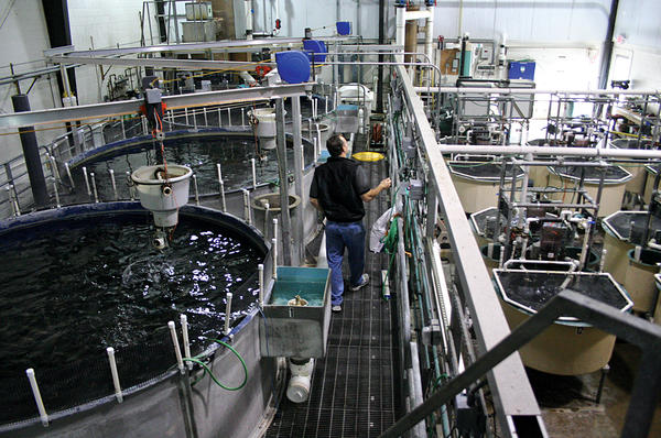 The Future of Food? Aquaculture & Aquaponics