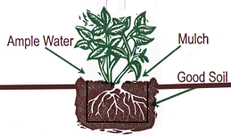 planting-diagram.png