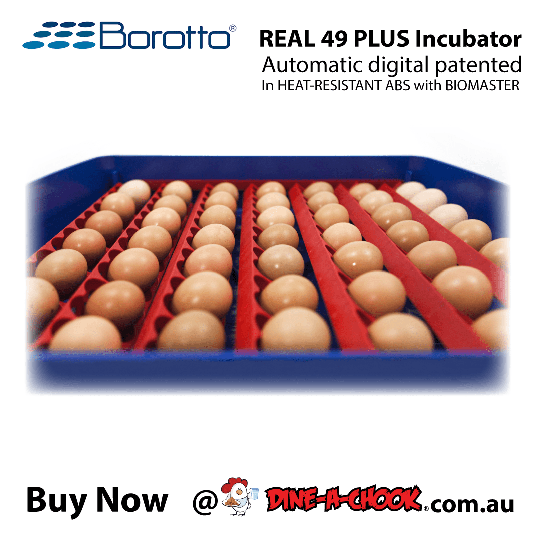 borotto-real-49-plus-incubator-real-49-plus-incubator9-min.png