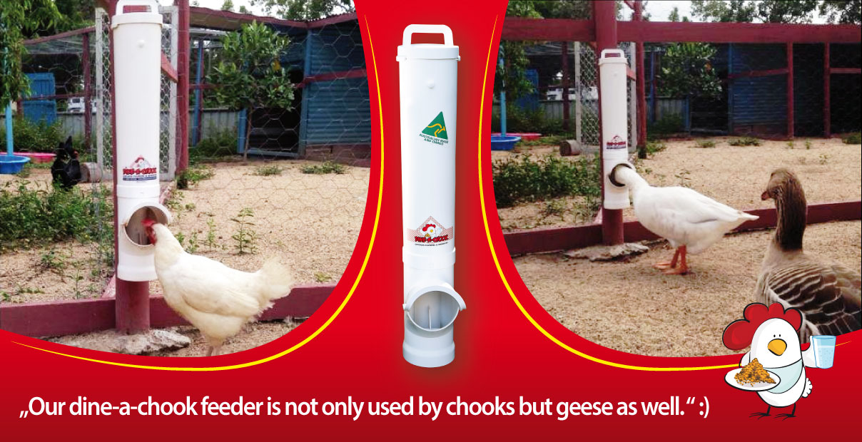 Dine A Chook PVC Feeder Features