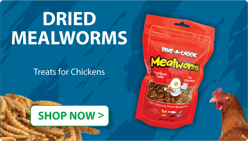 Dried mealworms for chickens for sale, Australia made, buy now | Dine A Chook