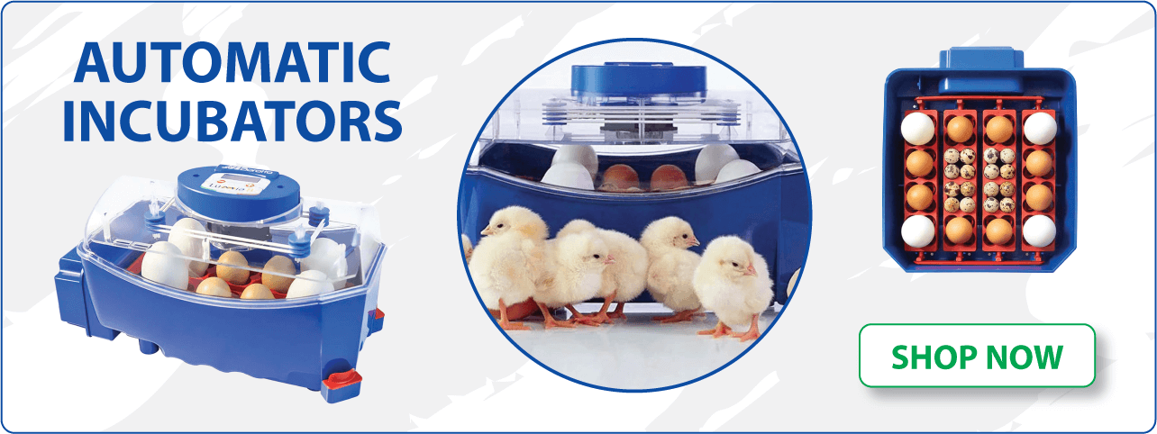 Automatic Chicken Incubators | Dine A Chook