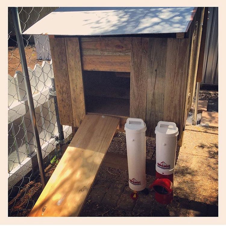 Dine A Chook red base chicken feeder and drinker pvc