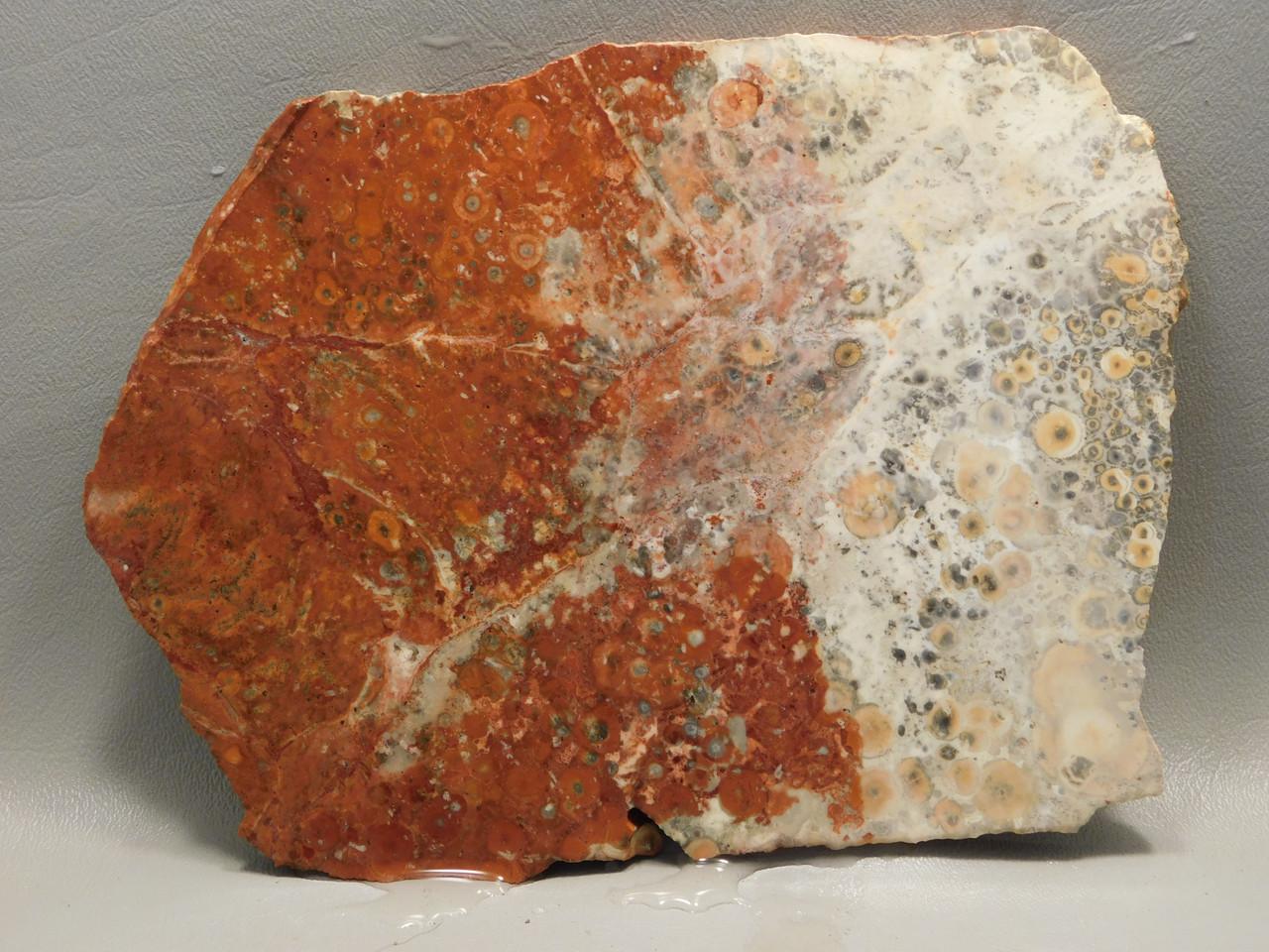 Birdseye Rhyolite Rough Rock Unpolished Stone Slab Mexico #O9