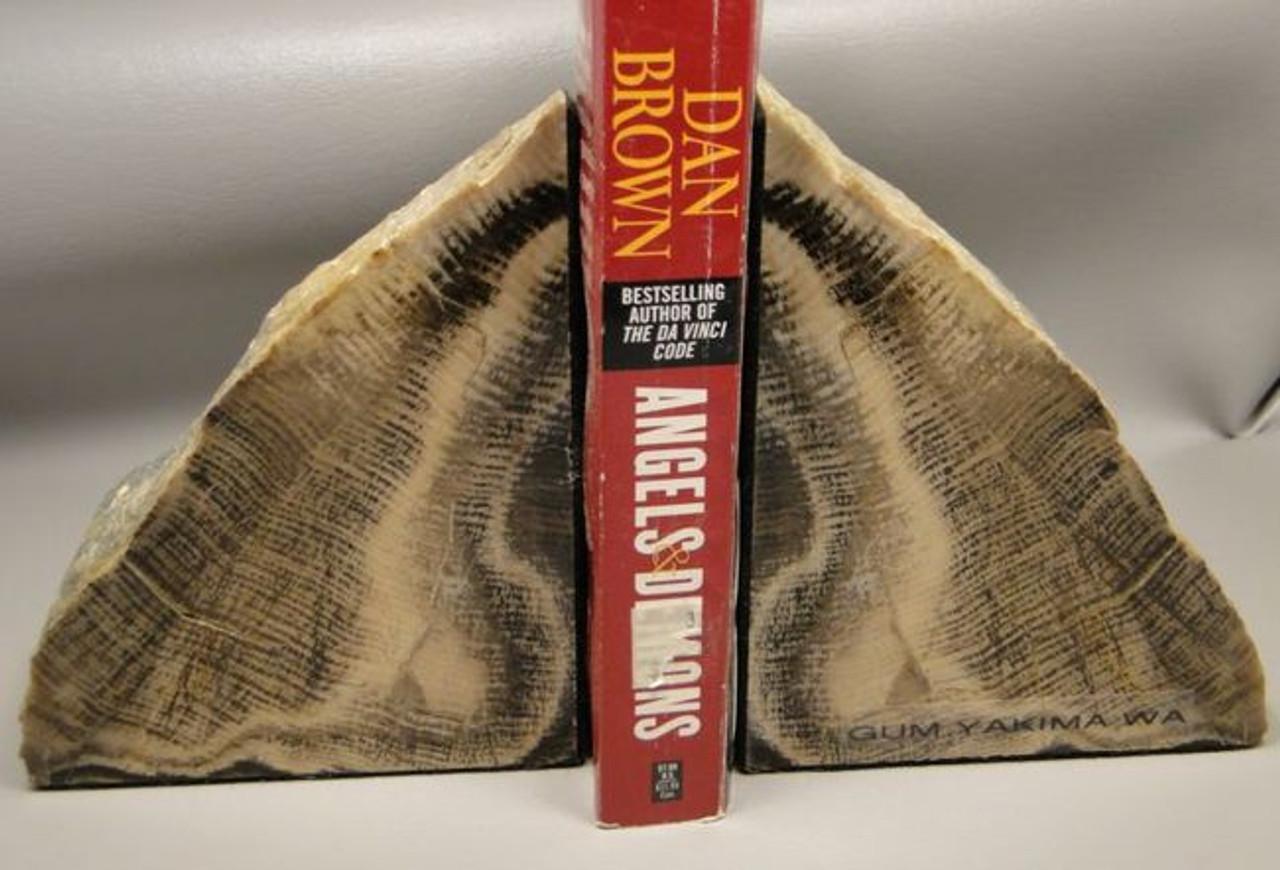 Petrified Gum Tree Wood Polished Bookends 5 inch Fossil Rock Washington