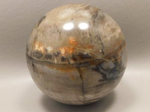 Arizona Petrified Wood Sphere Stone 3 inch or 75 mm Ball #OA2