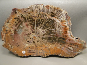 petrified-wood.jpg