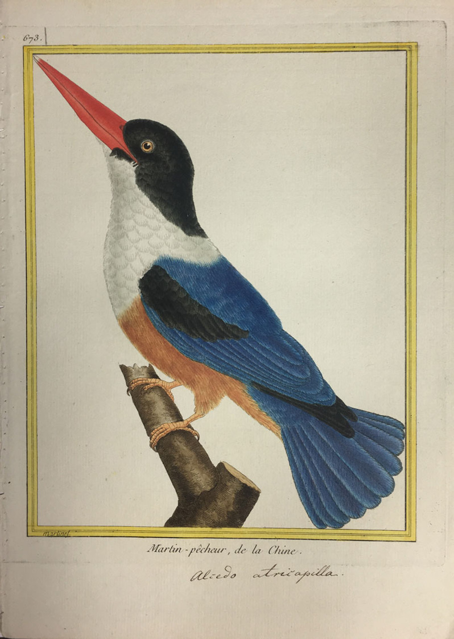 Kingfisher (China)