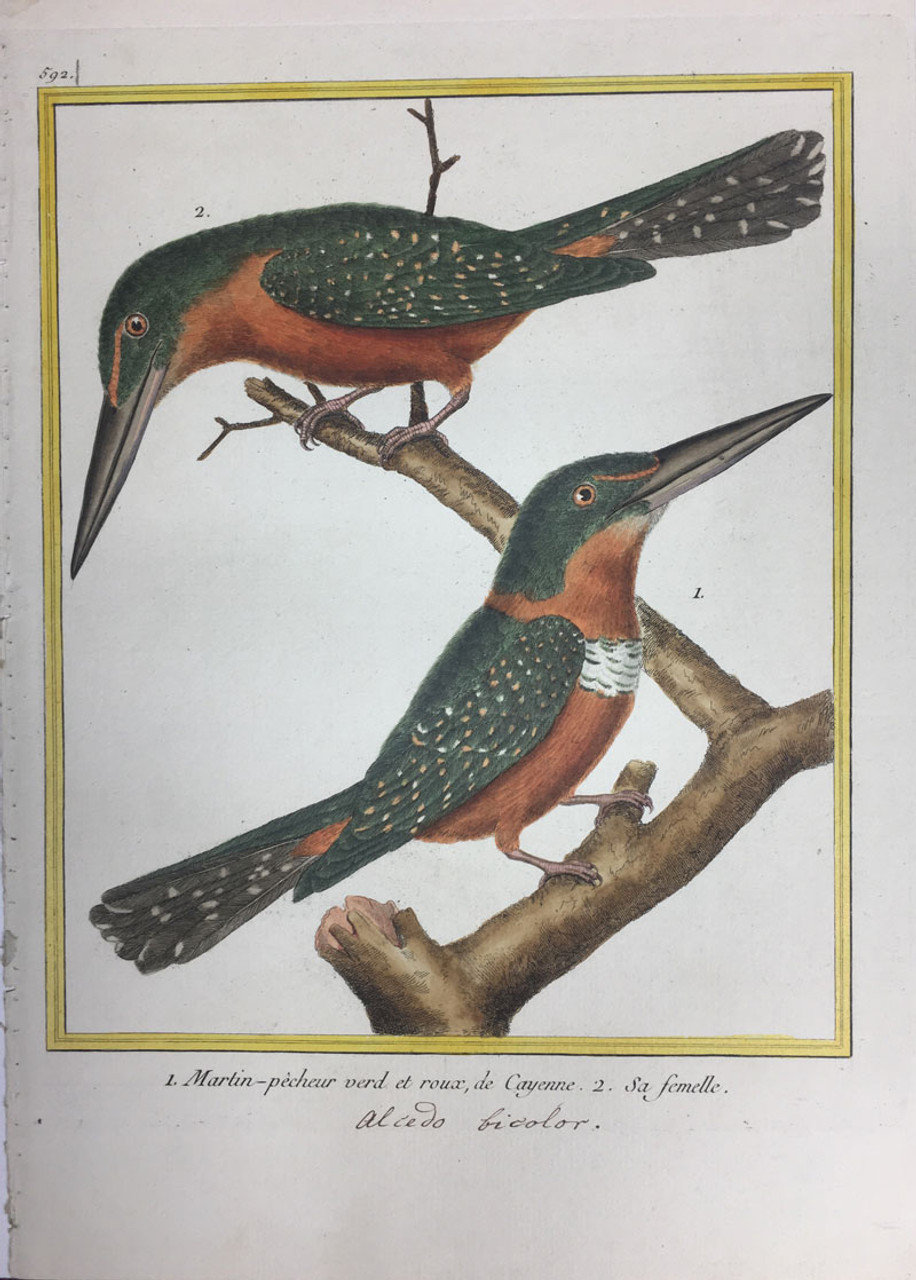 Kingfisher (Green & Red)