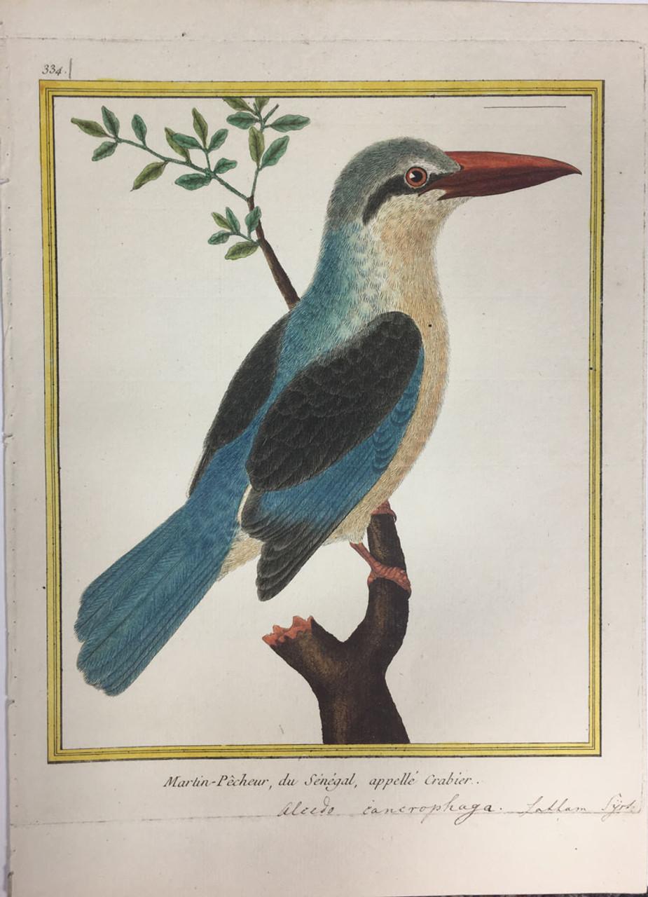 Kingfisher (Senegal)