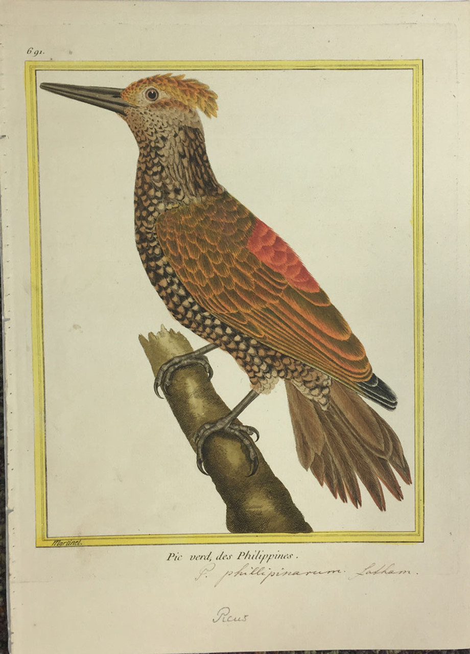Woodpecker (Phillipines)
