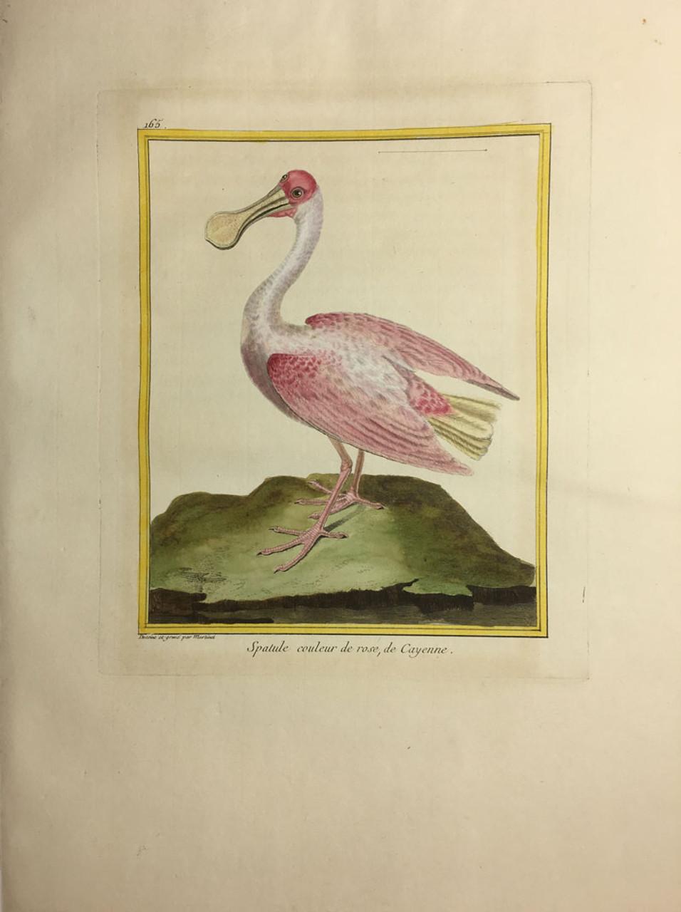 Roseate Spoolbill/Plate 165