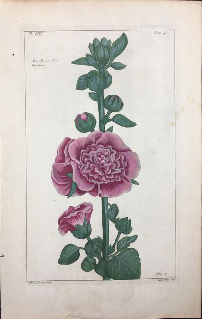Alcea rosacea Pl.VIII Decad 4