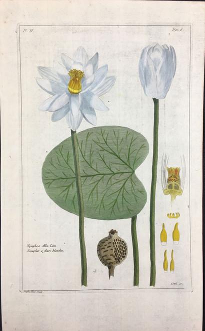 Nymphea alba Pl.IV Decad 6