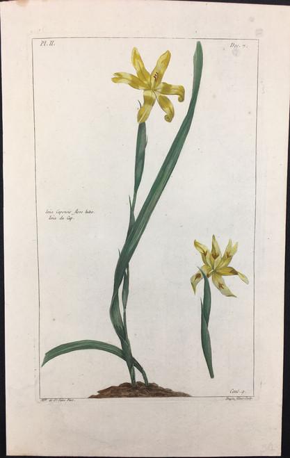 Ixia capensis Pl.II Decad 7