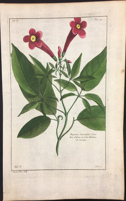 Bignonia leucoxylon Pl.V Decad 4