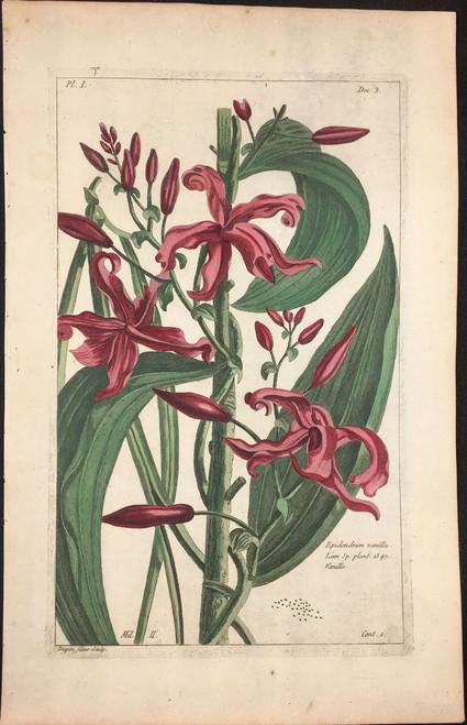 Epidendrum vanilla Pl. I Decad 3