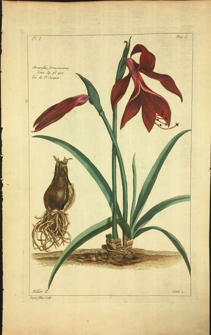 Amaryllis formosissima Pl.I Decad 1