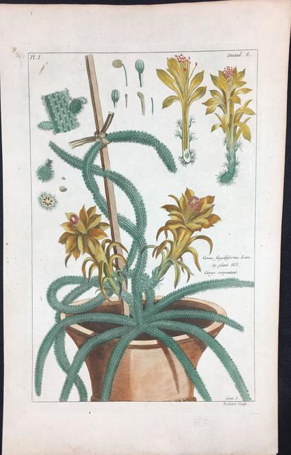 Cereus flagelliformis Pl.I Decad 8