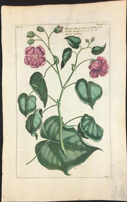 Hibiscus Tiliaceus Pl.X Decad 4