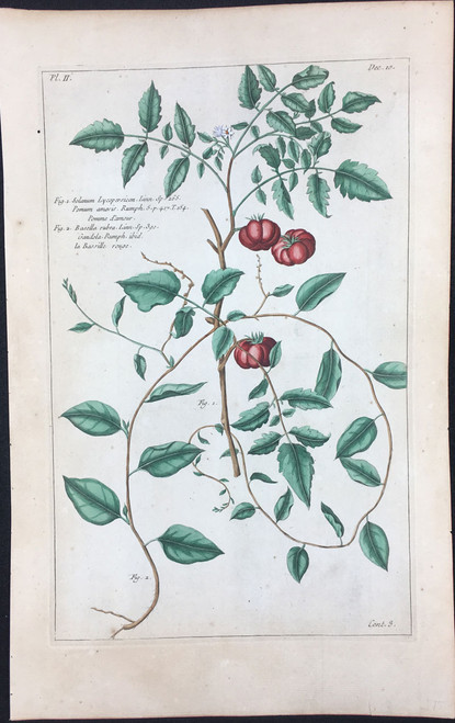 Solanum lycopersicon Pl.II Decad 10