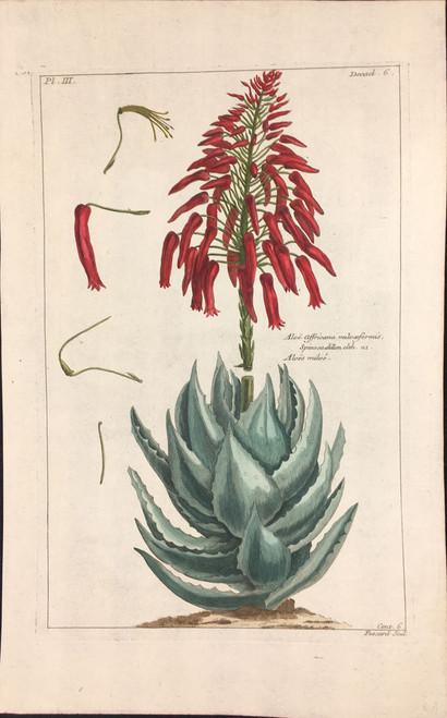 Aloe affricana Pl.III Decad 6