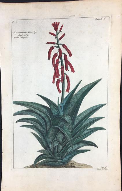 Aloe variegata Pl.II Decad 6