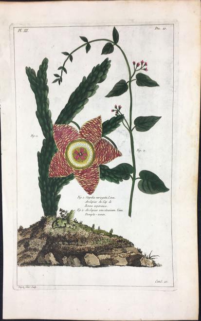 Stapelia variegata Pl.III Decad 10