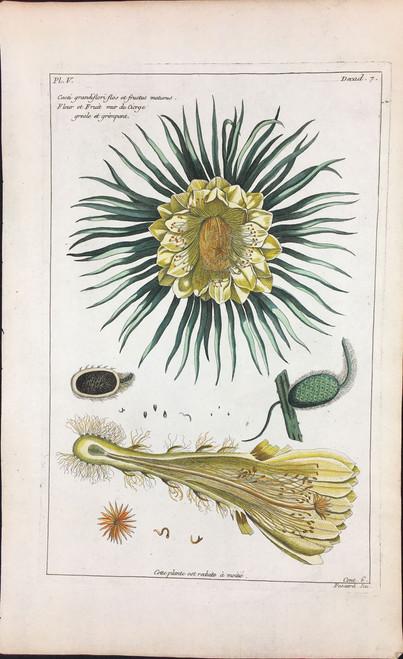 Cacti grandiflori flos et fructus Pl.V Decad 7